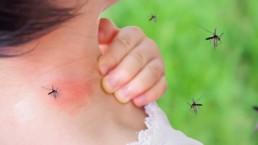 La dengue : que dois-je savoir ?