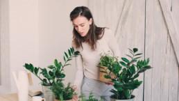 Les bienfaits d'avoir des plantes chez soi